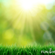 Green Lawn Care Tips for Cheap from Fun Cheap or Free