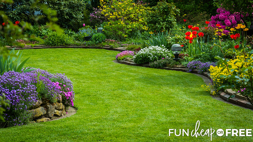 Green Lawn Care from Fun Cheap or Free