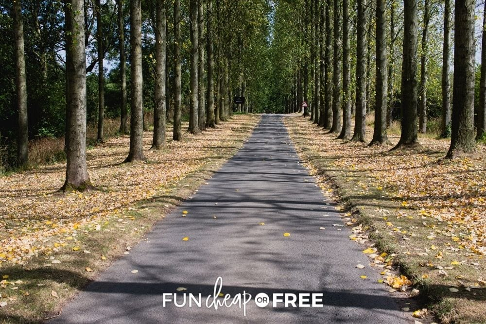 a clear, paved path in the woods, from Fun Cheap or Free
