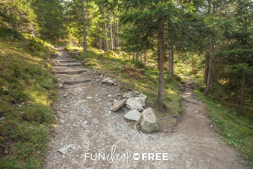 two paths in the woods, from Fun Cheap or Free