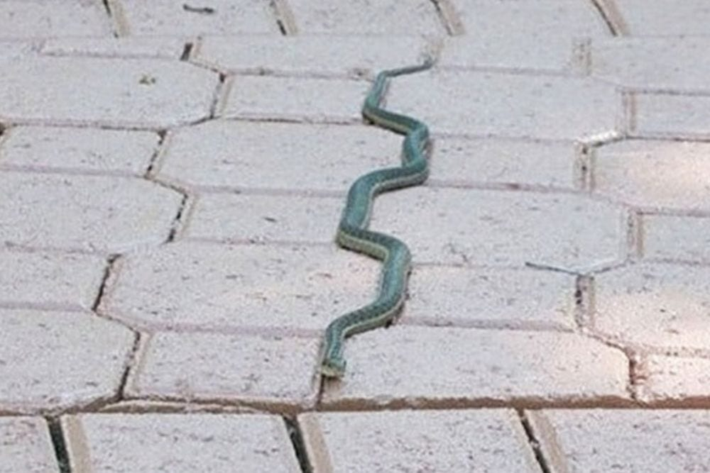 snake on pavers, from Fun Cheap or Freee