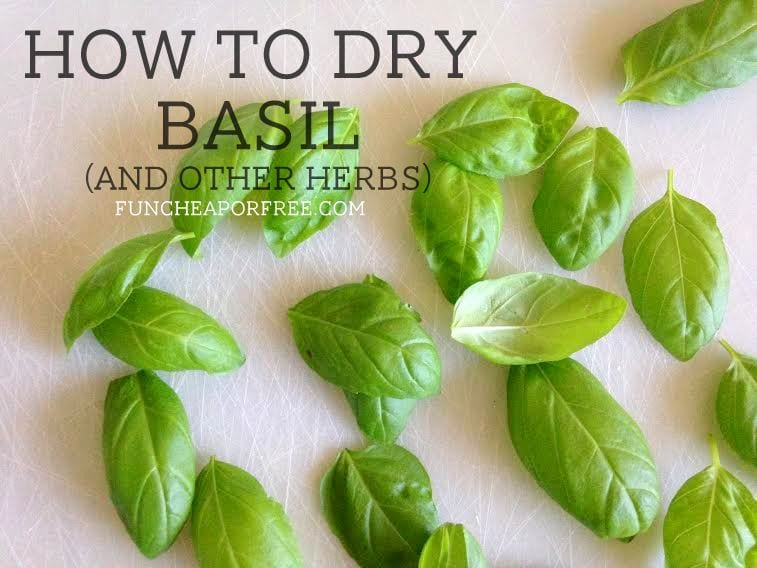 How to dry basil and other herbs. Did you know you can do it in the microwave??