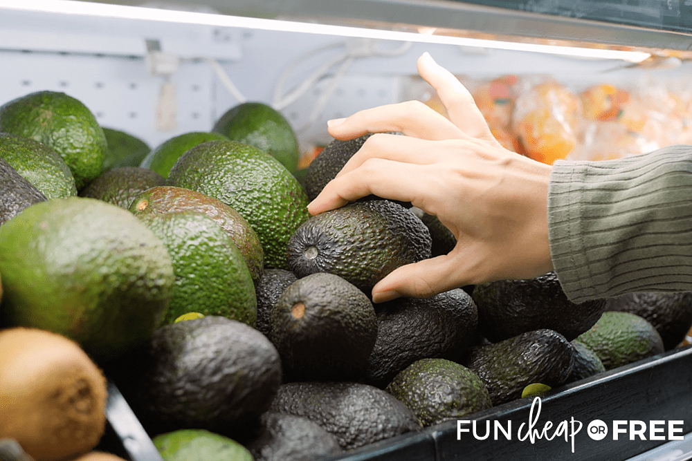 How To Pick Avocados from Fun Cheap or Free