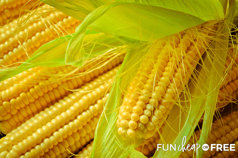 How To Pick the Perfect Corn from Fun Cheap or Free