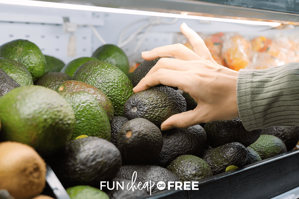 woman picking a ripe avocado, from Fun Cheap or Free