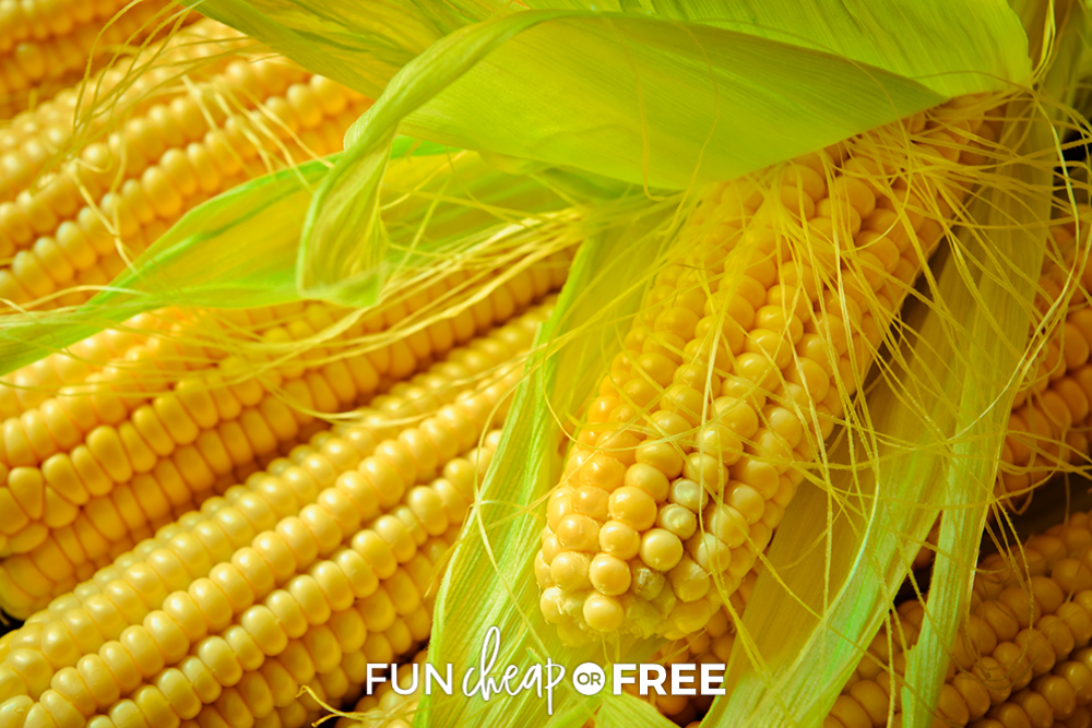 cobs of corn, from Fun Cheap or Free