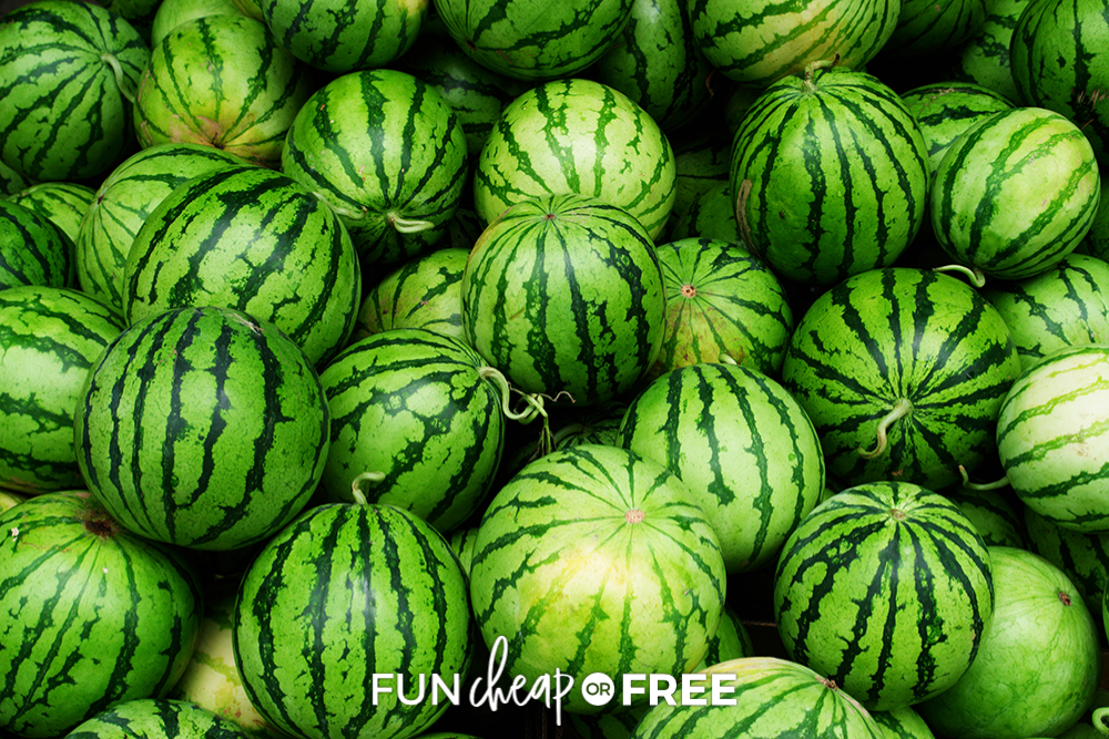 mini watermelons at the grocery store, from Fun Cheap or Free