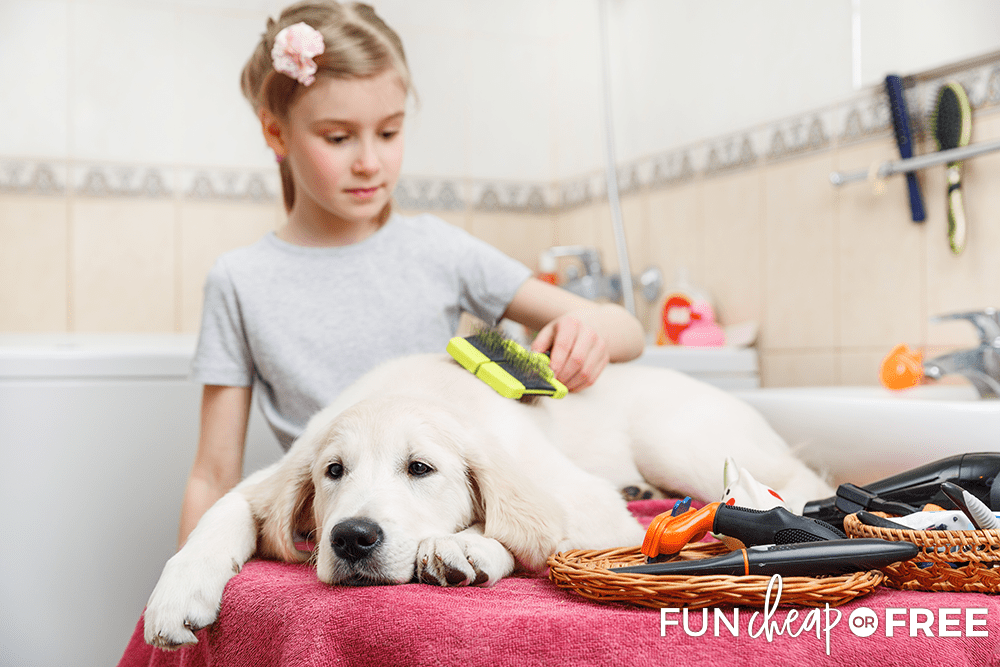 Kids Making Money By Dog Grooming from Fun Cheap or Free