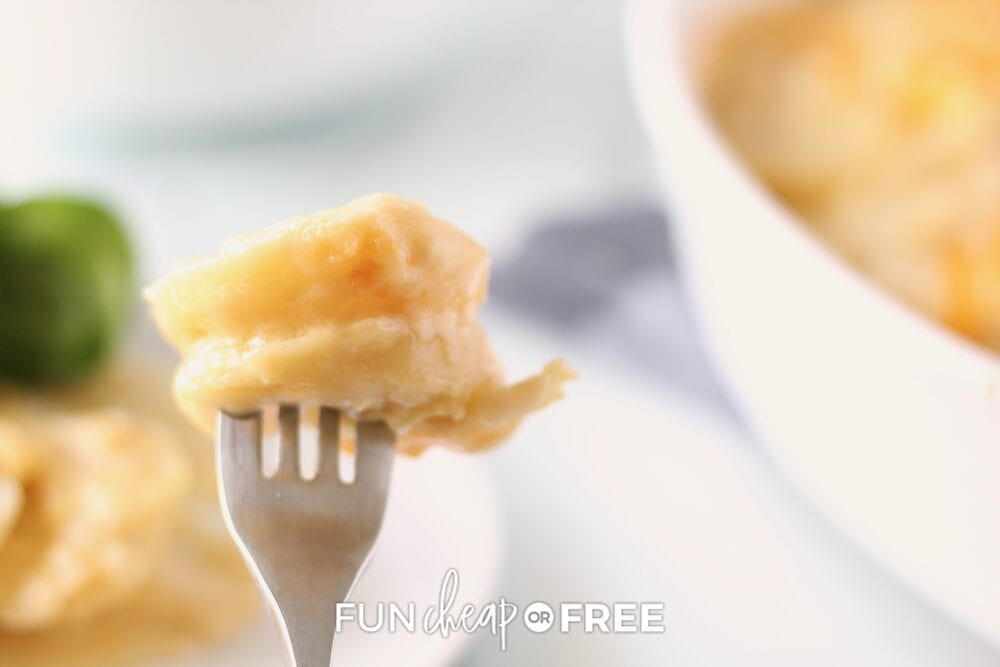 Fork holding up scalloped potatoes, from Fun Cheap or Free