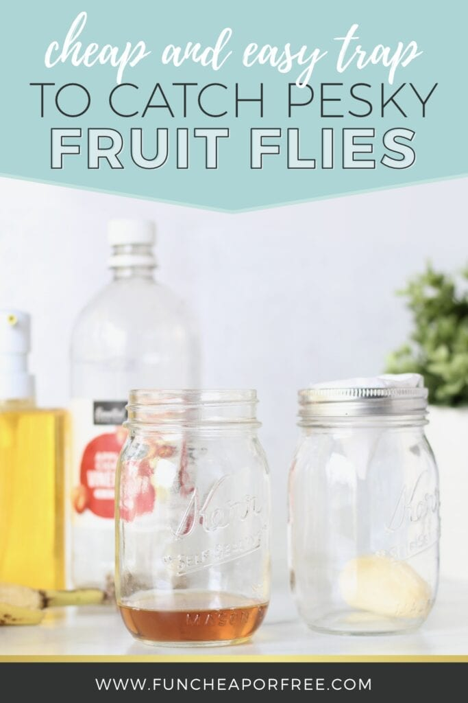 How to catch fruit flies the easy and natural way from Fun Cheap or Free