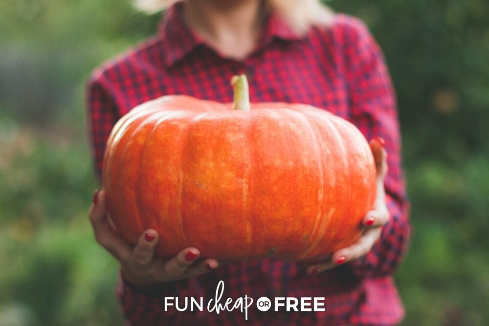 Woman holding a pumpkin out with trees in the background, from Fun Cheap or Free
