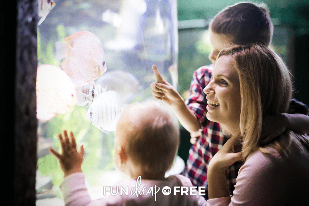 Mother with young son and toddler daughter visit an aquarium and look at fish, from Fun Cheap or Free