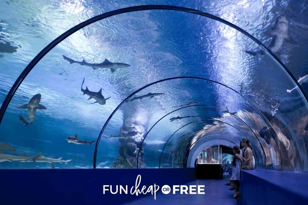family going to an aquarium from FunCheaporFree.com