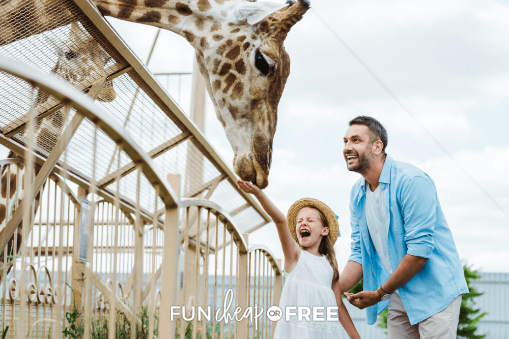 girl and father feeding a giraffe at zoo from FunCheaporFree.com
