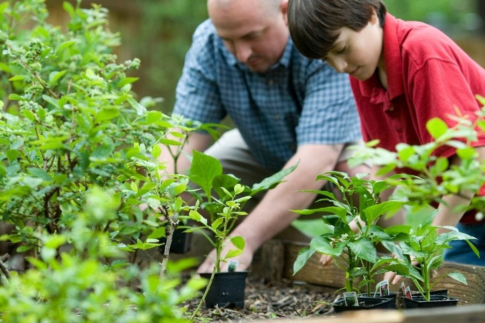 dad and son gardening, from Fun Cheap or Free